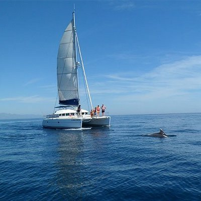 Catamaran dolphin tours with Hen Weekend Marbella, hen guided tours at sea